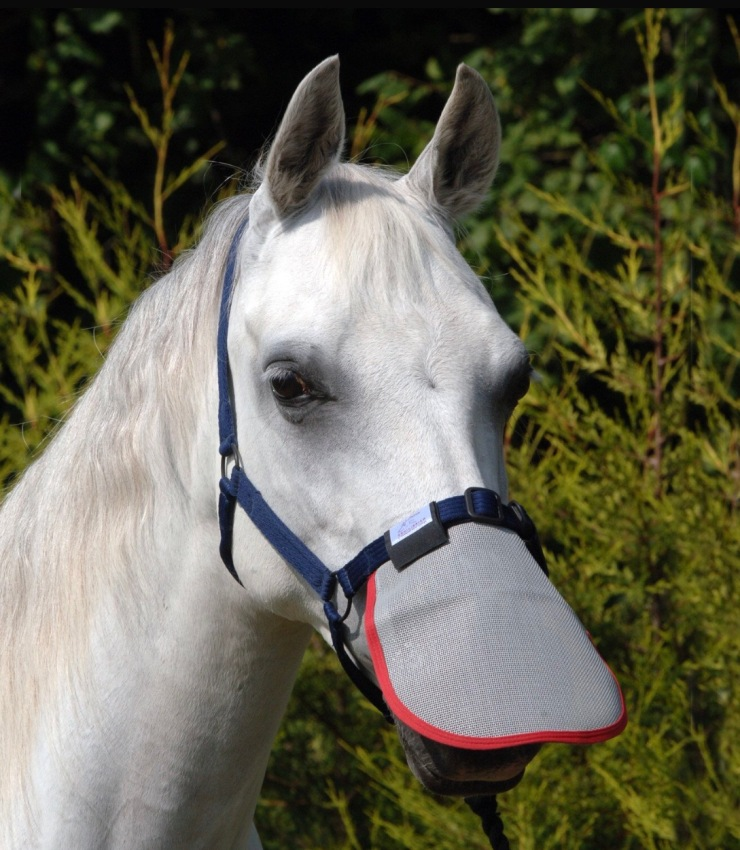 protect horse nose from sunburn.jpg