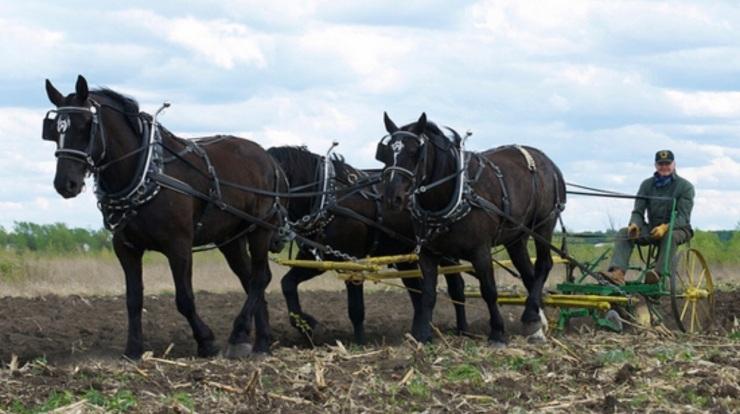 carriage.jpeg