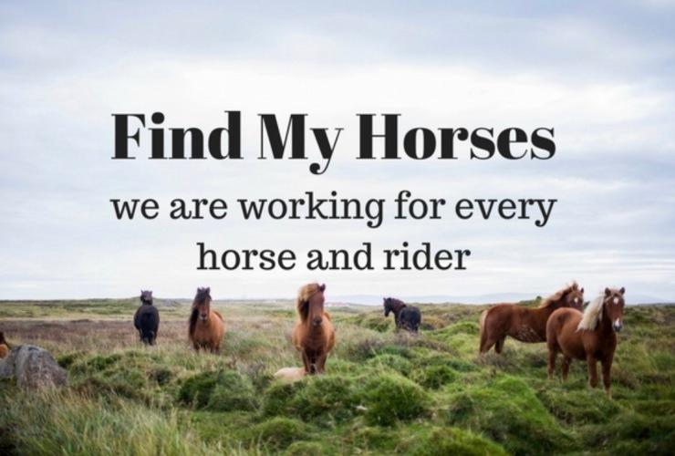 findmyhorses